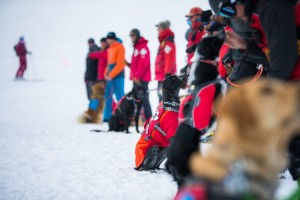 Row of participants with dogs at avalanche dog course