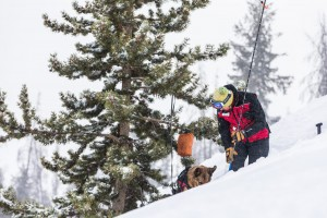 Dog and handler doing training with avalanche probes