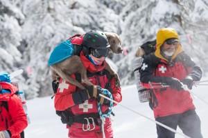 Dog handler with dog on shoulders