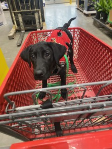 Puppy in shopping cart