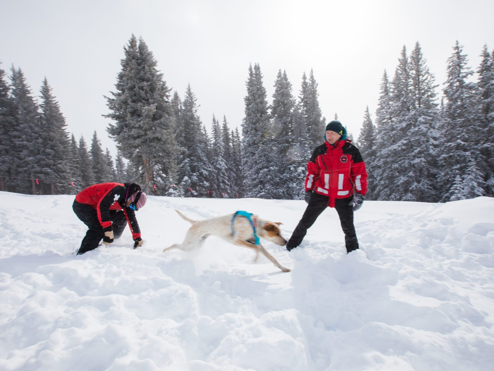 Avalanche training instructor helps dog and handler