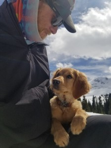 Golden retriever puppy gazing at handler